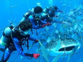 トップマリン残波 ジンベエザメ体験ダイビング